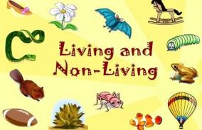 Living and Non‐living Things