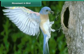 Body Movements: Movement in Bird