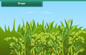 Reproduction in Plants: Crops