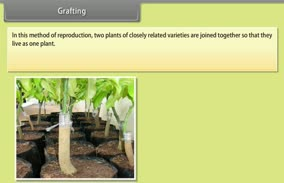 How Do Organisms Reproduce-I: Grafting