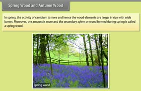 Anatomy of Flowering Plants: Spring Wood and Autumn Wood
