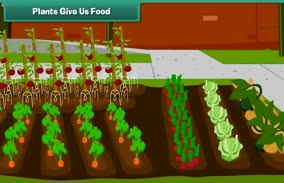 Sources of Food: Plants give Us Food