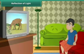 Light: Reflection of Light