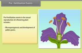 Sexual Reproduction in Flowering Plants: Pre- Fertilization Events