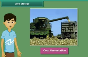 Crop Production and its Management: Crop Storage