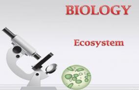 Ecosystem: Assessment