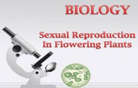 Sexual Reproduction in Flowering Plants: Assessment